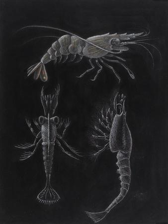 https://imgc.artprintimages.com/img/print/crustacea_u-l-pk6bwt0.jpg?p=0