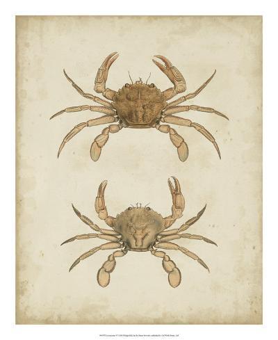 Crustaceans VI-James Sowerby-Giclee Print