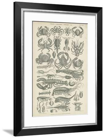 Crustaceans--Framed Giclee Print