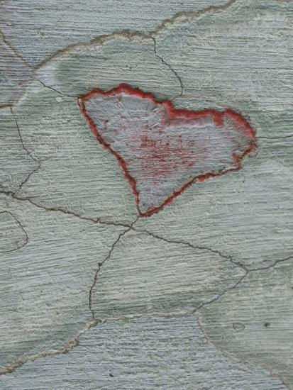 Crustose Lichens on Tree Bark, Corkscrew Swamp Sanctuary, Florida, USA-Fritz Polking-Photographic Print