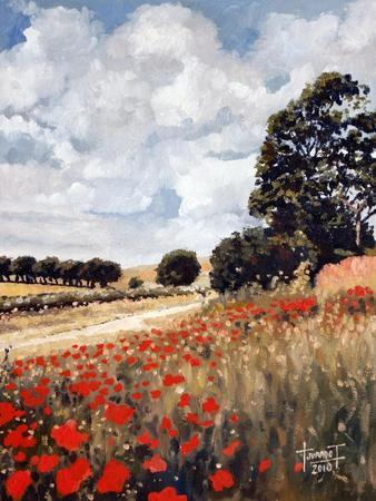 Wild Poppies, Hertfordshire, 2010