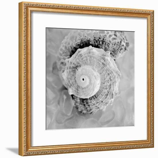 Crystal Cove #41-Alan Blaustein-Framed Photographic Print