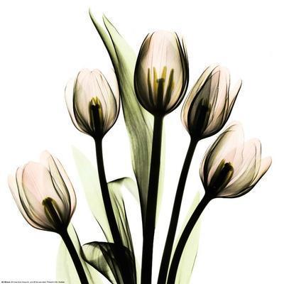 https://imgc.artprintimages.com/img/print/crystal-flowers-x-ray-tulip-bouquet_u-l-f4i7s30.jpg?p=0