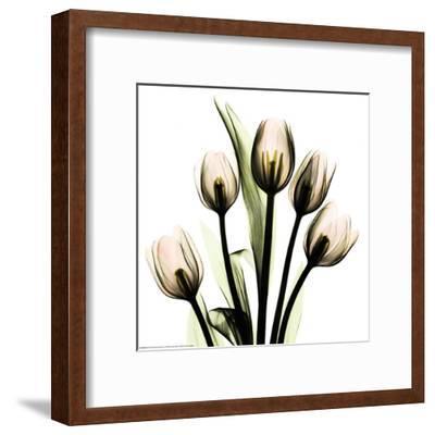 Crystal Flowers X-ray, Tulip Bouquet-Albert Koetsier-Framed Art Print
