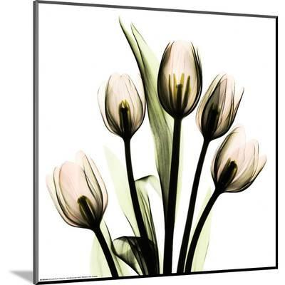 Crystal Flowers X-ray, Tulip Bouquet-Albert Koetsier-Mounted Print