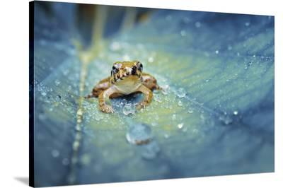 Crystal Guard-Robby Fakhriannur-Stretched Canvas Print