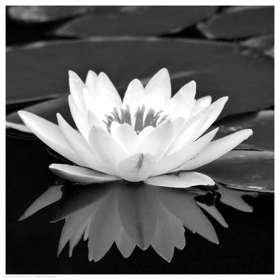 https://imgc.artprintimages.com/img/print/crystal-reflection-ii_u-l-f5uzy10.jpg?p=0
