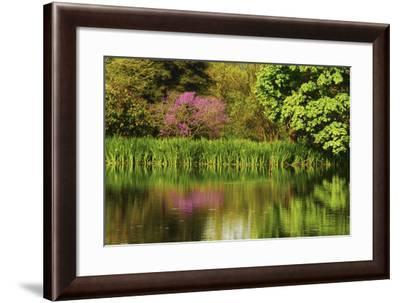 Crystal Springs Rhododendron Garden in Spring, Portland, Oregon, USA-Michel Hersen-Framed Photographic Print