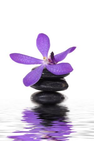 Beautiful Orchid and Stone with Water Reflection