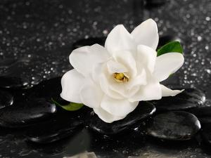 Gardenia Flower by crystalfoto