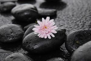 Hydrangea and Wet Stones by crystalfoto