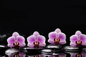 Set of Four Orchid with Therapy Stones by crystalfoto