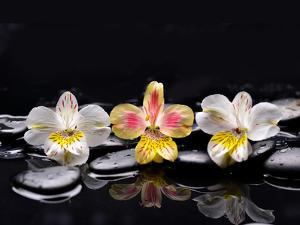 Still Life with Black Stone and Three Orchid by crystalfoto