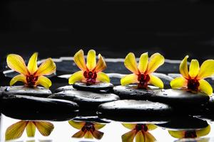 Still Life with Four Orchid with Stones on Water Drops by crystalfoto