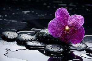 Still Life with Pebble and Orchid with Water Drops by crystalfoto