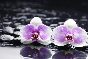 Two Gorgeous Orchid on Stones Reflection by crystalfoto