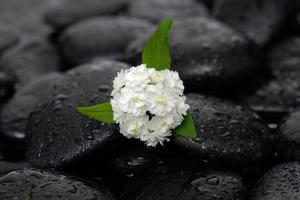 White Hydrangea and Wet Stones by crystalfoto