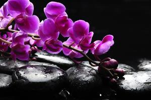 Zen Stone and Pink Orchid with Reflection by crystalfoto