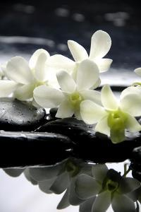Zen Stones And Branch White Orchids With Reflection by crystalfoto