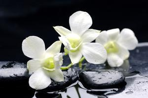 Zen Stones and Tiger's Orchids with Water Drops by crystalfoto