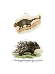 Cuandu, 1860