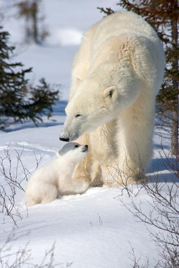 Cub Looking Up to Mother-Howard Ruby-Photographic Print
