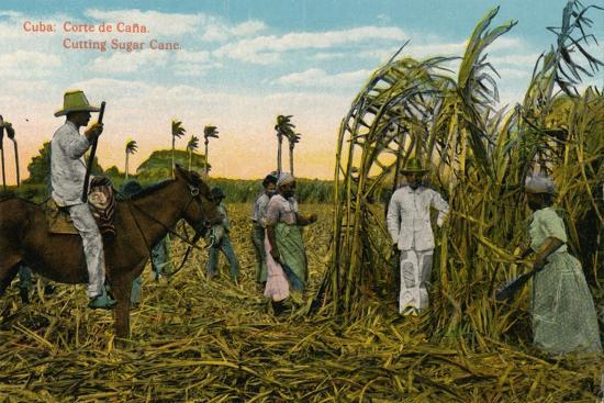 Cuba: Corte de Cana. Cutting Sugar Cane, c1910-Unknown-Giclee Print