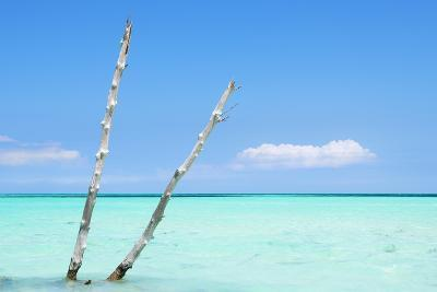 Cuba Fuerte Collection - Aquatic Tree II-Philippe Hugonnard-Photographic Print