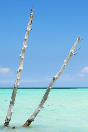 Cuba Fuerte Collection - Aquatic Tree III-Philippe Hugonnard-Photographic Print