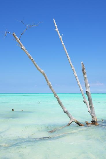 Cuba Fuerte Collection - Aquatic Tree-Philippe Hugonnard-Photographic Print