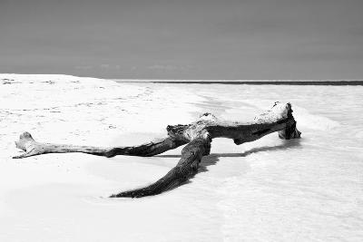 Cuba Fuerte Collection B&W - Black Tree-Philippe Hugonnard-Photographic Print