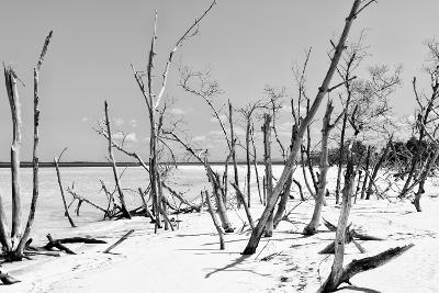 Cuba Fuerte Collection B&W - Desert of White Trees IV-Philippe Hugonnard-Photographic Print