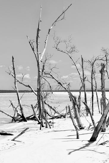 Cuba Fuerte Collection B&W - Desert of White Trees V-Philippe Hugonnard-Photographic Print