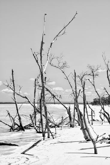 Cuba Fuerte Collection B&W - Desert of White Trees VI-Philippe Hugonnard-Photographic Print