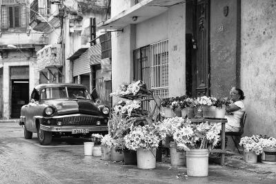 Cuba Fuerte Collection B&W - Sunflowers-Philippe Hugonnard-Photographic Print