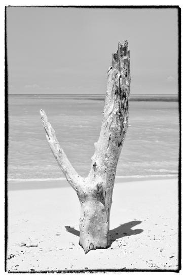 Cuba Fuerte Collection B&W - Tree on the Beach-Philippe Hugonnard-Photographic Print