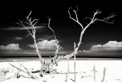 Cuba Fuerte Collection B&W - Trees and White Sand II-Philippe Hugonnard-Photographic Print
