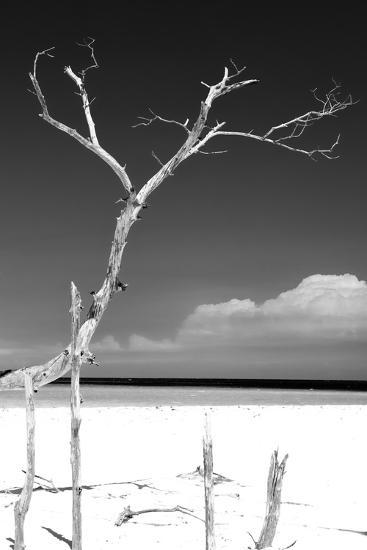 Cuba Fuerte Collection B&W - Trees and White Sand III-Philippe Hugonnard-Photographic Print