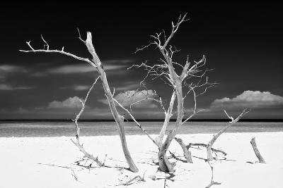 Cuba Fuerte Collection B&W - Trees and White Sand V-Philippe Hugonnard-Photographic Print