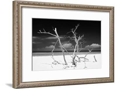 Cuba Fuerte Collection B&W - Trees and White Sand V-Philippe Hugonnard-Framed Photographic Print