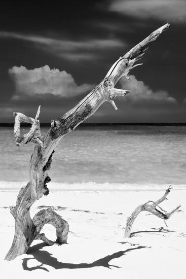 Cuba Fuerte Collection B&W - Trees and White Sand X-Philippe Hugonnard-Photographic Print