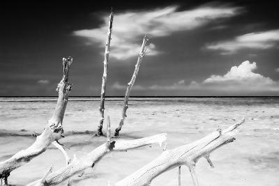 Cuba Fuerte Collection B&W - Trees and White Sand XI-Philippe Hugonnard-Photographic Print