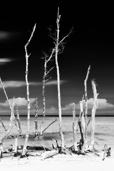 Cuba Fuerte Collection B&W - Trees and White Sand XIV-Philippe Hugonnard-Photographic Print