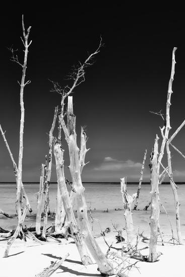 Cuba Fuerte Collection B&W - White Trees Beach II-Philippe Hugonnard-Photographic Print