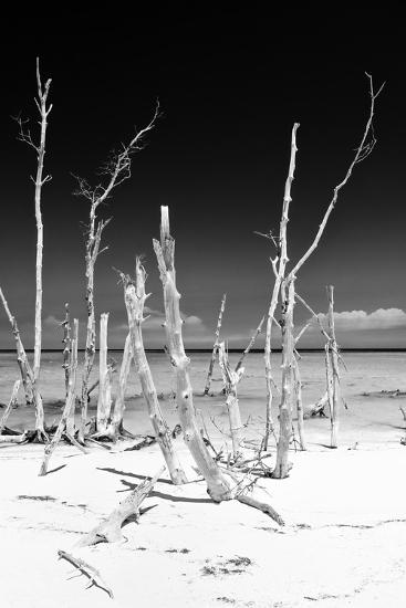 Cuba Fuerte Collection B&W - White Trees Beach III-Philippe Hugonnard-Photographic Print