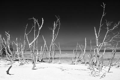 Cuba Fuerte Collection B&W - White Trees Beach IV-Philippe Hugonnard-Photographic Print
