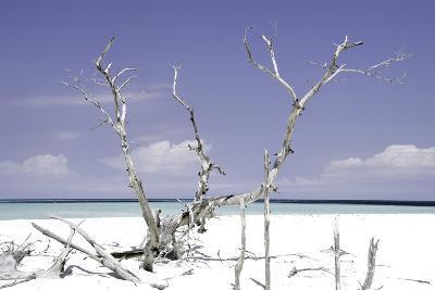 Cuba Fuerte Collection - Beautiful Wild Beach II-Philippe Hugonnard-Photographic Print