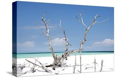 Cuba Fuerte Collection - Beautiful Wild Beach-Philippe Hugonnard-Stretched Canvas Print