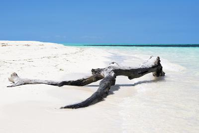 Cuba Fuerte Collection - Black Tree on the Beach-Philippe Hugonnard-Photographic Print