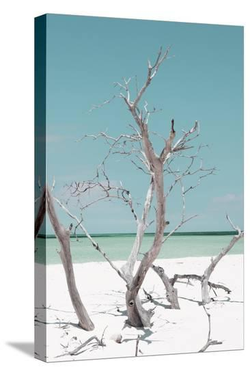 Cuba Fuerte Collection - Coral Green Stillness II-Philippe Hugonnard-Stretched Canvas Print